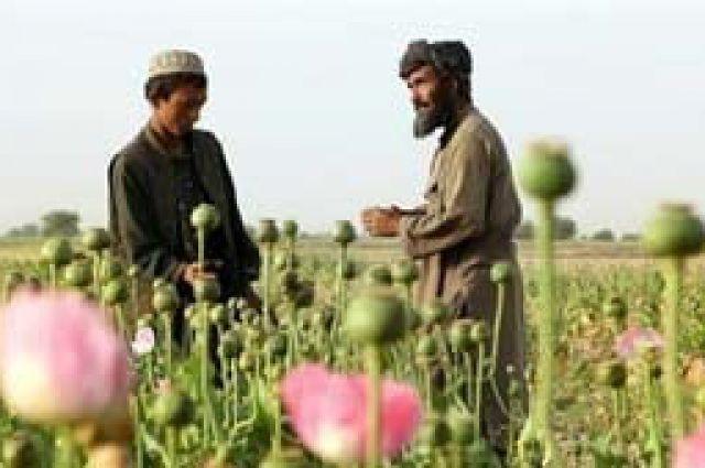 АиФ Наркополицейские пресекли канал поставки афганского героина в Самару наркоторговля