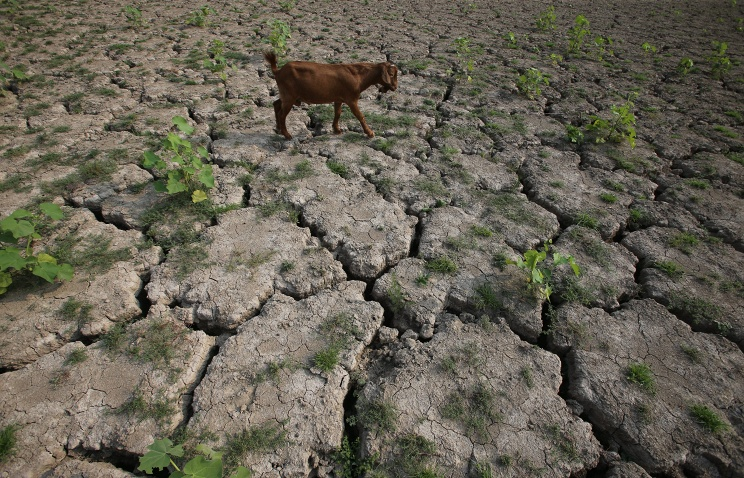 2014 стал самым жарким годом за всю историю наблюдений